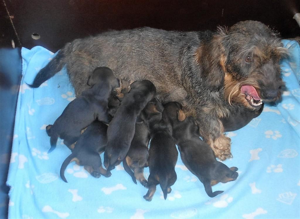 HP met pups 1