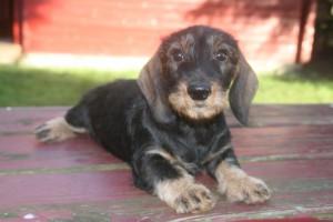 20120328_IMG div honden_2325 (Kopie) (Kopie)