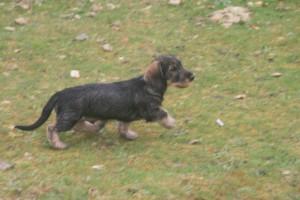 20120401_IMG div honden_2336 (Kopie) (Kopie) (2)